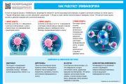 О принципах работы вакцины «ЭпиВакКорон